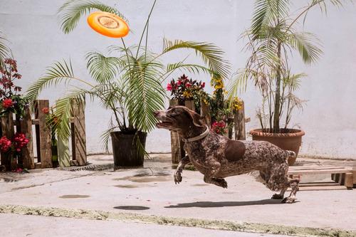 pensión canina -hotel hospedaje de perros- guardería - paseo