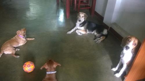 pensión canina, hotel, hospedaje para perros