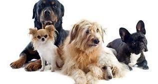pensión canina y felina higuerote