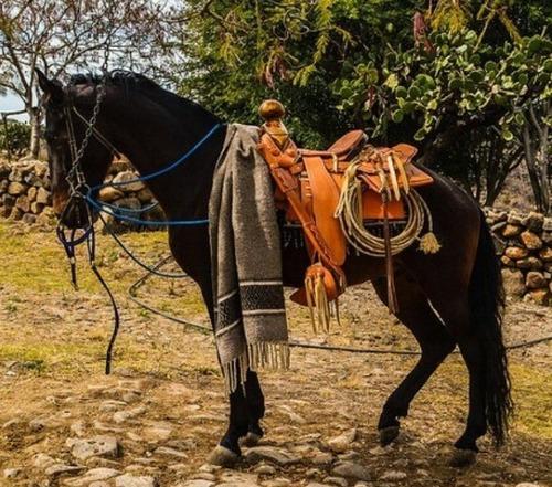 pension para caballos