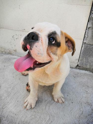 pensión para mascotas cerca aeropuerto monterrey