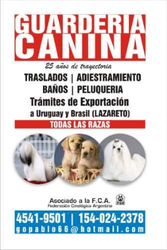 pensionado adiestrador canino-felino sin caniles en belgrano