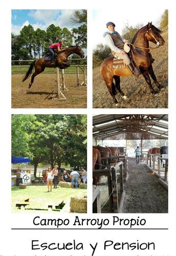 pensionado caballo campo/box escuela - equinoterapia