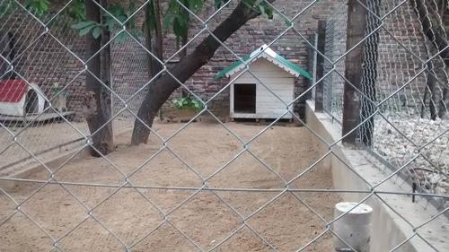 pensionado canino bamboo