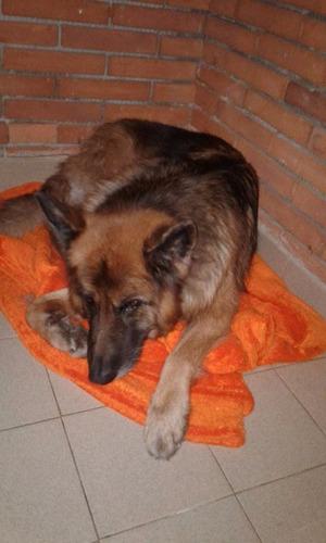 pensionado canino en caballito