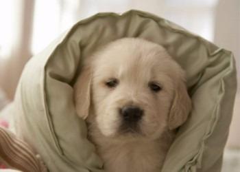 pensionado canino familiar