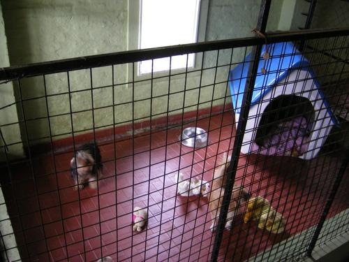pensionado canino guarderia hoch z norte 28 años experiencia