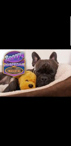 pensionado canino snoopy