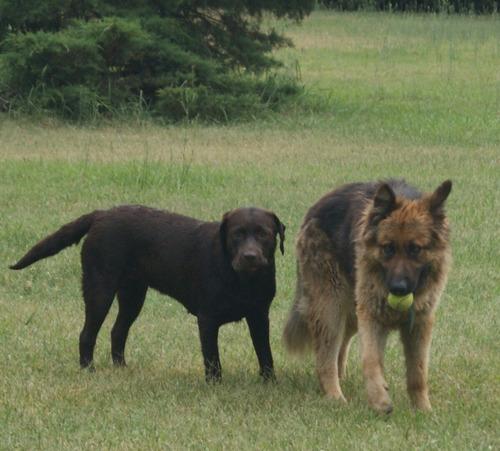 pensionado canino y guarderia veterinaria peumayen.