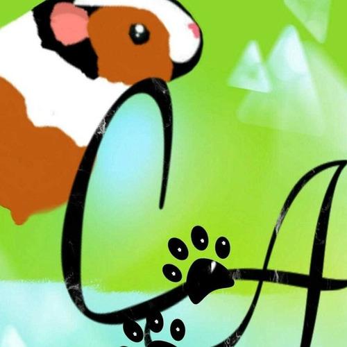 pensionado cobayos conejos chinchilla roedores cobayos arg