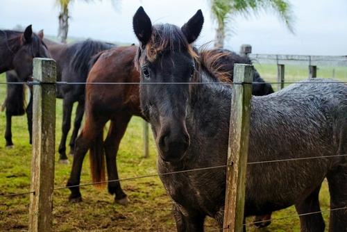 pensionado de caballos