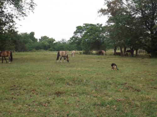 pensionado equino caballos a box o a campo a 58 km de caba