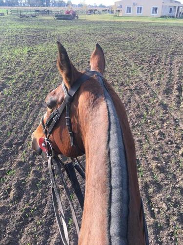 pensionado equino, clases de polo