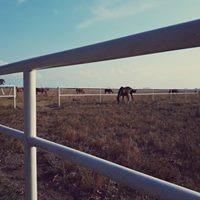 pensionado equino y centro ecuestre ... $1400 a campo