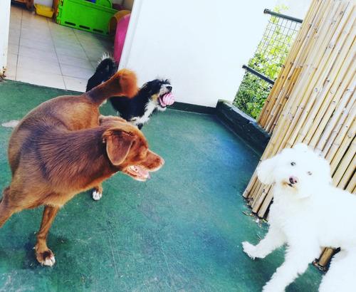 pensionado guardería canina familiar perros chicos