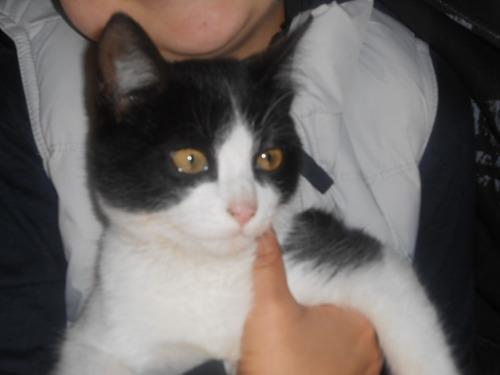 pensionado guarderia gatos felinos atendido x veterinario