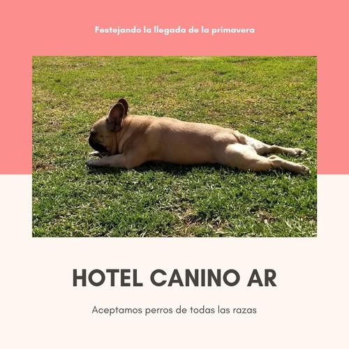 pensionado /guardería / hostería canina - hotel canino ar