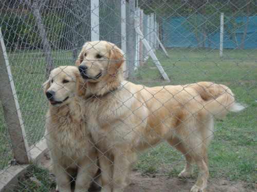 pensionado, guarderia y dia de campo para perros alla lejos