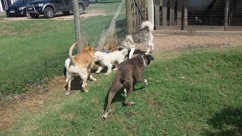 pensionado hotel guarderia para perros