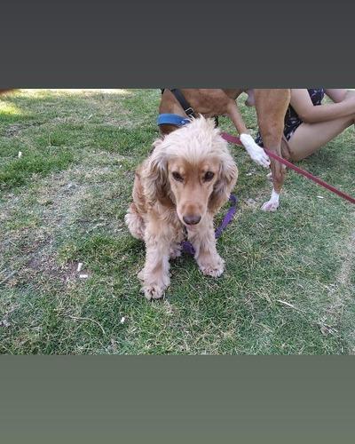 pensionado hotel guardería y paseo de perros y mascotas