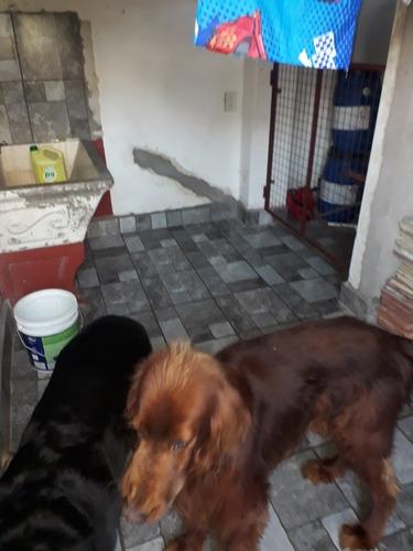 pensionado o guarderia canina