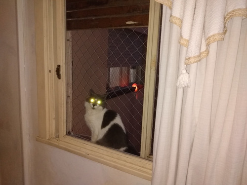 pensionado para gatos j&d