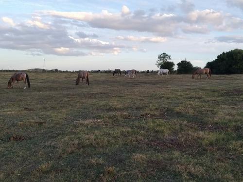 pensionado pastoreo equino caballos