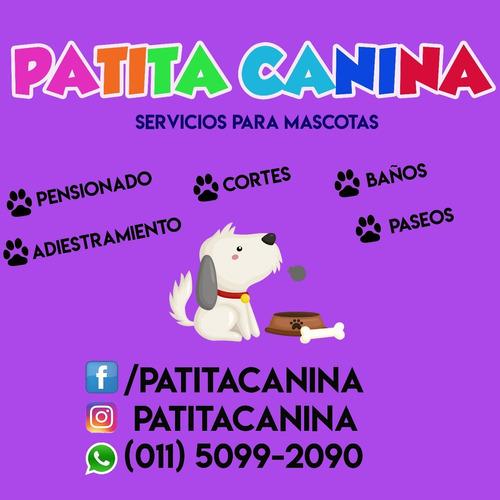 pensionado y guarderia canina