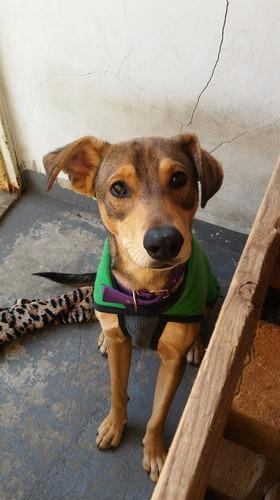 pepino, cachorrón en adopción