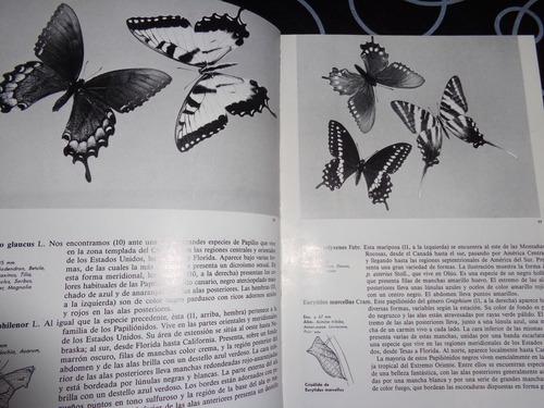 pequeña enciclopedia de mariposas