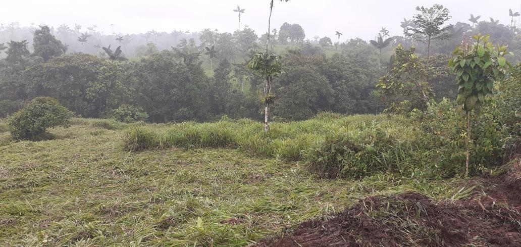 pequeña finca de 3 hectáreas en pedro vicente maldonado