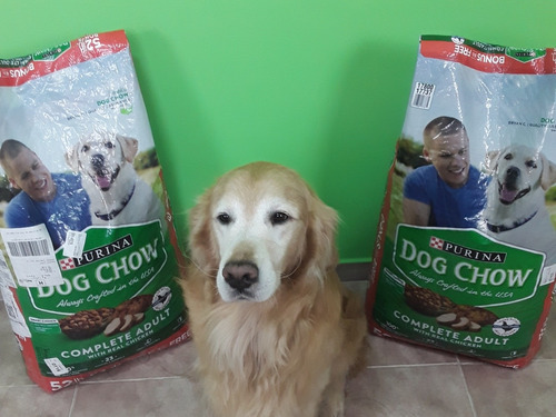 perrarina purina dog show 23kg comida para perros adultos