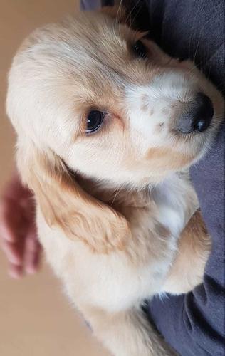 perritos para mascota