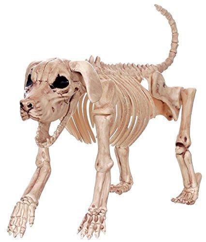 perro loco esqueleto bonez - beagle bonez