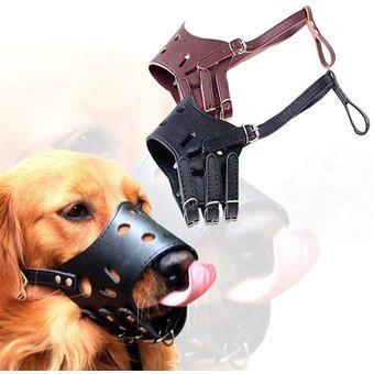 perro mascota bozal
