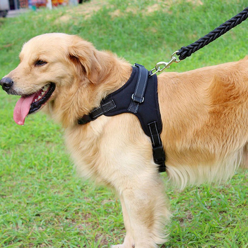perro mascota paseo pechera arnés