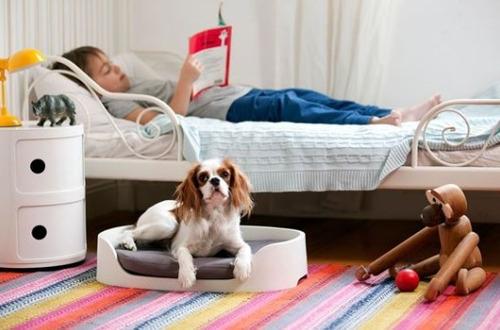 perro mascotas cama