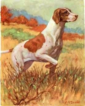 perro pointer - a o scott 1930 - lámina 45x30 cm.