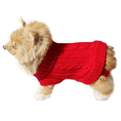 perro ropa animal