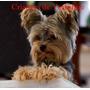 Criadero Calipso Cachorros Disponibles Consulte