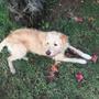 Peludo Y Chascon Cachorro De 10 Meses En Adopción