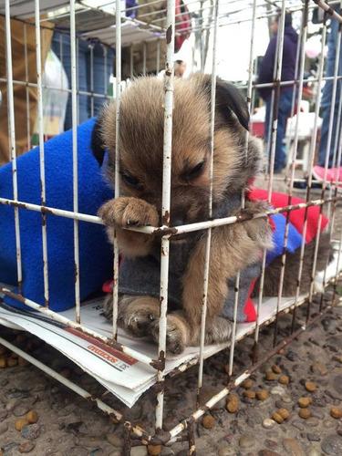 perros adultos y cahorros q esperan un hogar nen adopcion