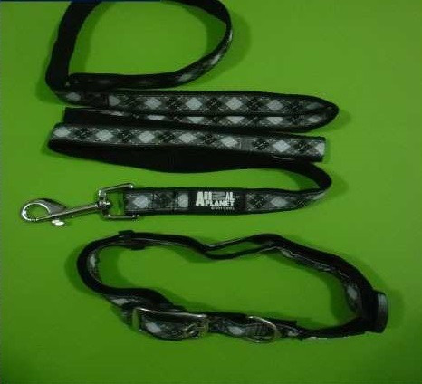 perros animal collares