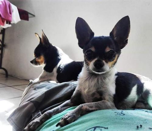 perros bonitos y chiquitos... ¿¿