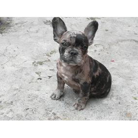 1864ac5c7b722 Disfraces Para Perros Bulldog Frances en Veracruz en Mercado Libre ...
