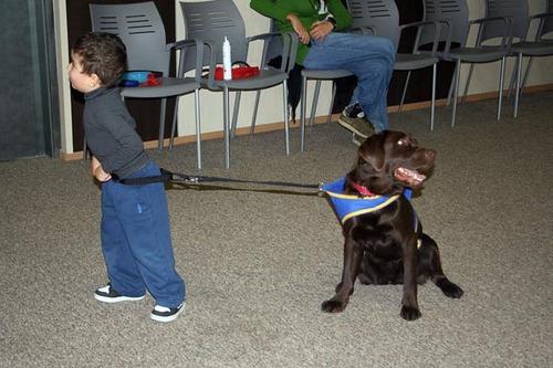 perros de apoyo emocional (certificación)