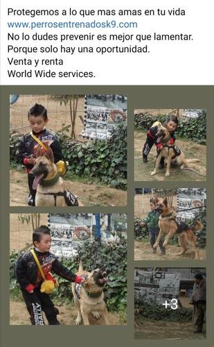 perros entrenados antisecuestro k9 police