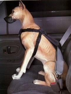 arnes perros para auto