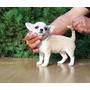 Chihuahua Hembrita Blanca/crema Inscrita Kcc