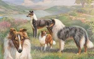 perros raza collie - e. miner 1923 - lámina 45x30 cm.